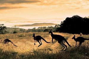 オーストラリアクルーズ